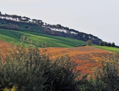 Borgo di Mutignano